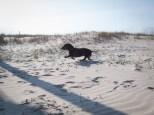 Tybee Island with Amos and Eva - 20130112 - 26
