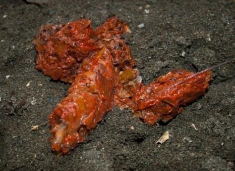 Neotropical Otter Tracks and Scat - Lontra longicaudis - 02.02.2010 - 11.24.54