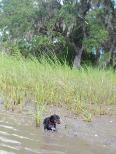 Skidaway Island with the Dogs - 08.11.2013 - 14.03.25
