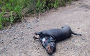 Mud dogs - 06.15.2014 - 12.27.07