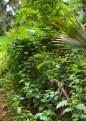 Wild Sage - Lantana camara - 07.20.2014 - 10.34.50