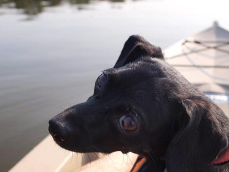Kayaking with Amos - 08.06.2014 - 17.46.43