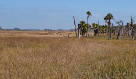 Ossabaw Island - Montemarano - 11.14.2014 - 13.32.51