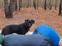 Camping and Kayaking at George Smith State Park - 03.20.2015 - 12.55.19