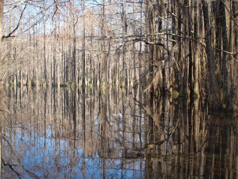 Camping and Kayaking at George Smith State Park - 03.20.2015 - 14.47.13