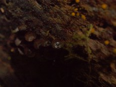 Bird's nest fungus - 07.04.2015 - 11.19.57