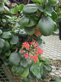 Green house flowers - 05.20.2016 - 12.28.20