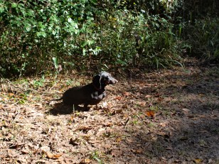 Harris Neck with Dogs - 11.24.2013 - 13.41.16