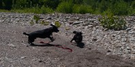 Letchworth State Park with the dogs - 06.04.2013 - 14.33.02