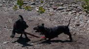Letchworth State Park with the dogs - 06.04.2013 - 14.33.03