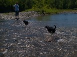 Letchworth State Park with the dogs - 06.04.2013 - 14.40.56