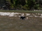 Letchworth State Park with the dogs - 06.04.2013 - 14.42.29