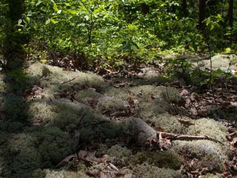 Lichen bed - 05.26.2013 - 13.03.59