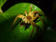 Spider eating beetle