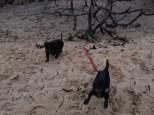 Skidaway Island with Jenn and Matt - 12.31.2013 - 13.30.44