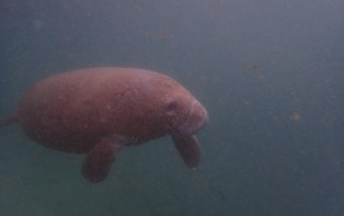 Manatee Dive and Tour - 02.18.2017 - 10.33.04