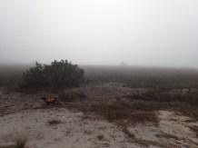 Little Tybee Island Camping - 01.15.2017 - 12.17.06
