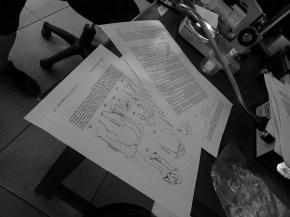 20180623 - Crab identification - Allacanthos pittieri 016