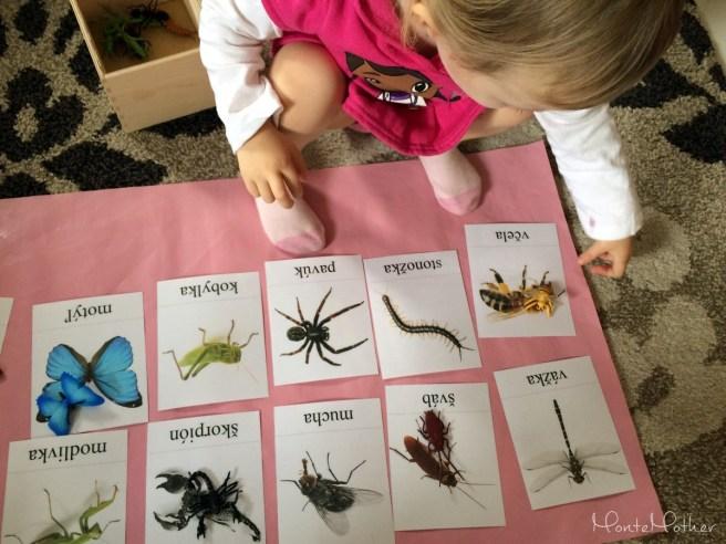 miniatury safari hmyz MonteMother