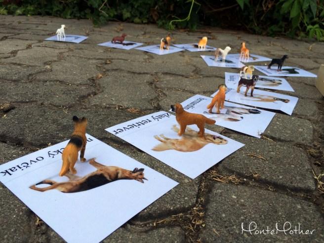 miniatury safari plemena psov MonteMother