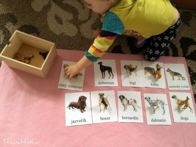 miniatury safari plemena psov karticky