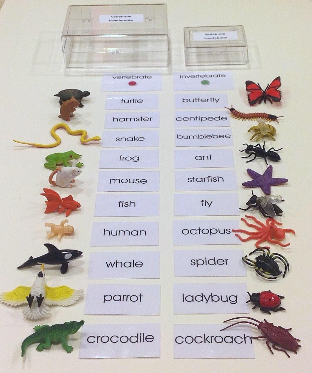 Vertebrate And Invertebrate