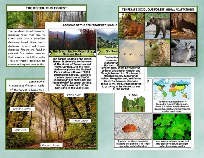 The Deciduous Forest Biome