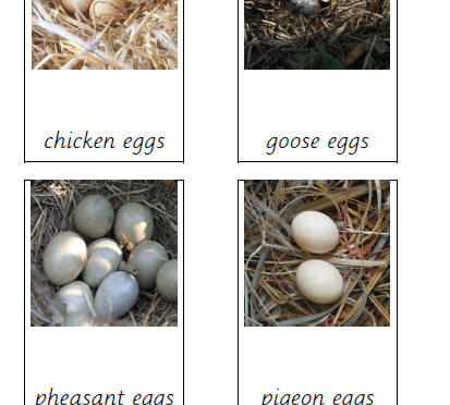 Birds and their eggs