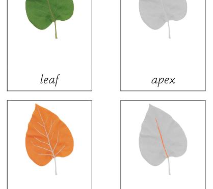 Leaf (Parts of)