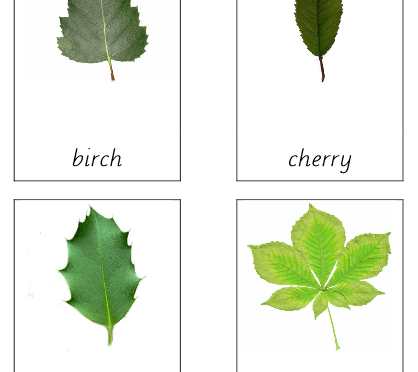 Leaves (types of)