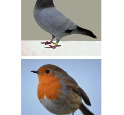 British bird photos 2 a page