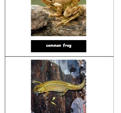 Amphibian photo cards