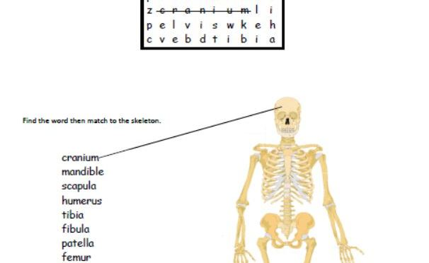 Human skeleton wordsearch