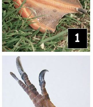 Animal feet numbered photos