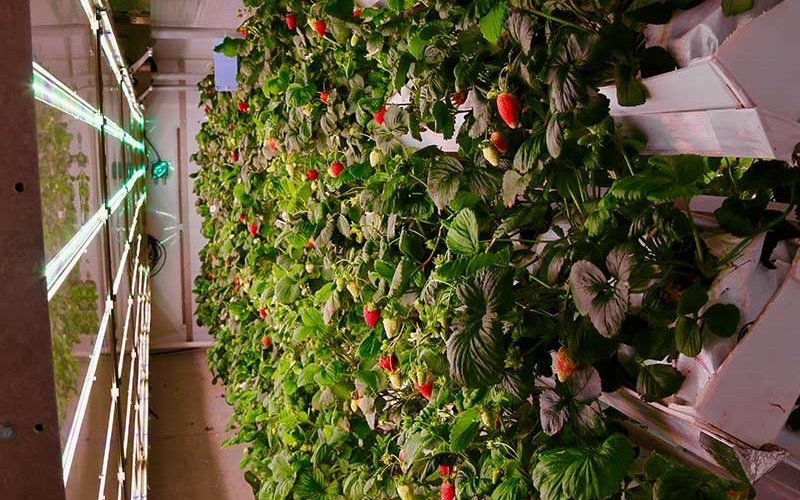 Ferme d'hiver, an AI-powered agricultural automation startup, gets $1.3 million