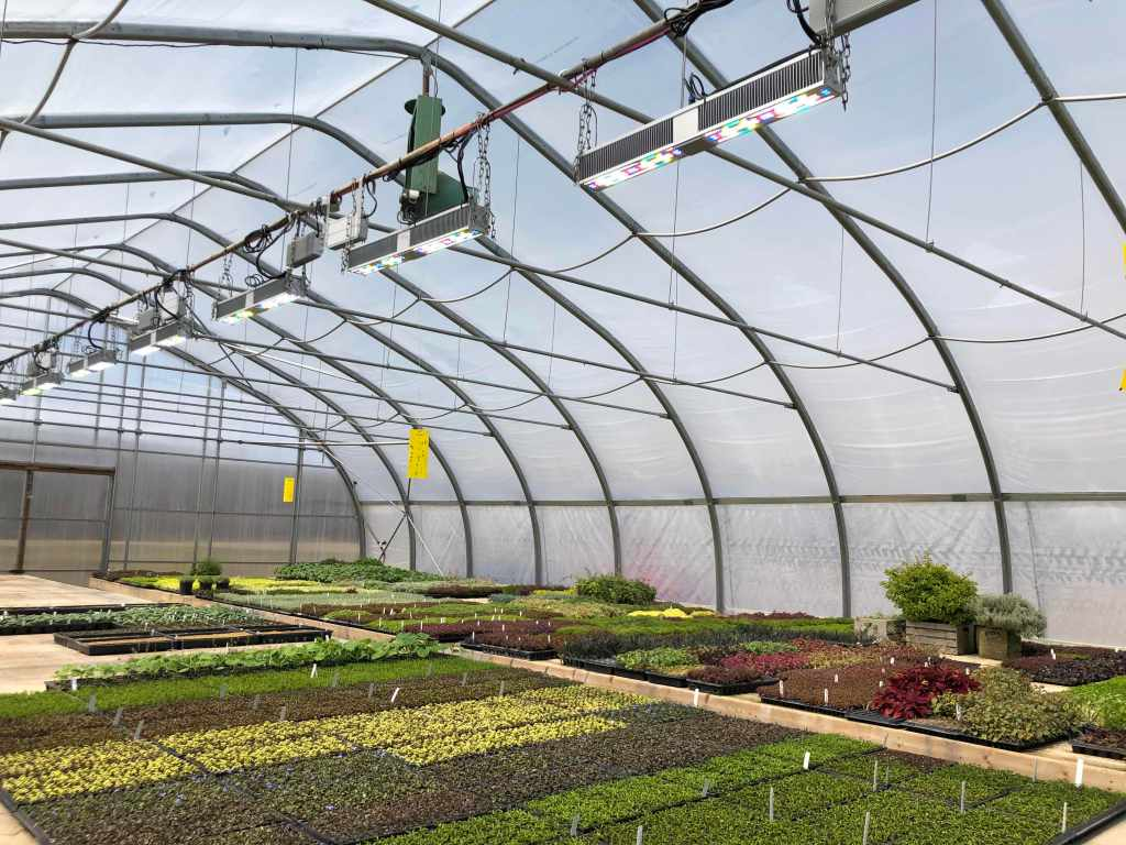 Sollum's smart LED lighting solution for greenhouse growers gets $5 million investment