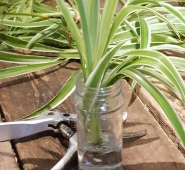 BinnenkortKamerplanten; basic verzorging en vermeerderen.