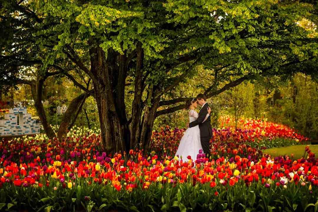 bruidspaar tulpen keukenhof