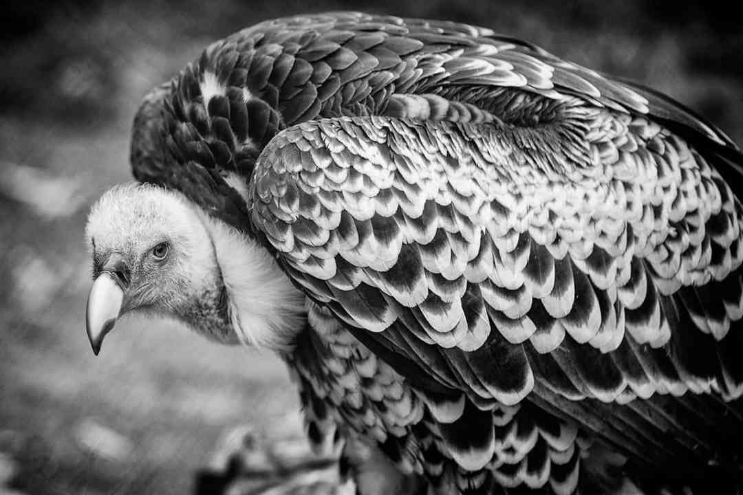 fotografie vogelpark Avifauna