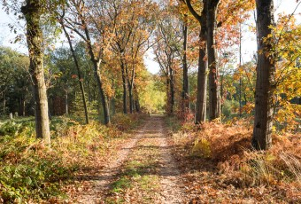 NS-wandeling Hart van het Groene Woud