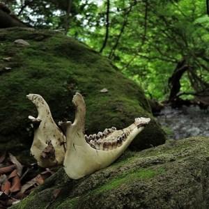 the bare bones of vulture culture