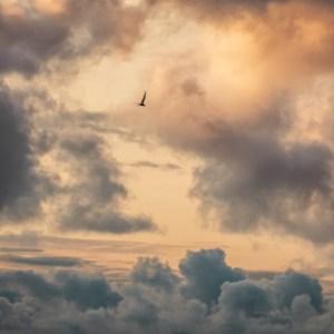 Poetry by Jaya Avendel : Dawn