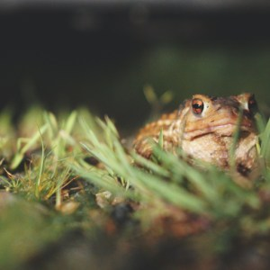 Poetry by Lisa Creech Bledsoe : Toadskin