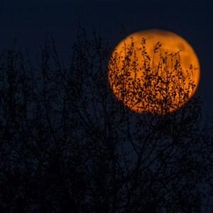 Magical Fiction - Under a Pagan Moon by Diana L. Creaturo