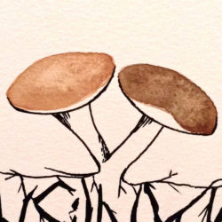 Picture of two mushrooms
