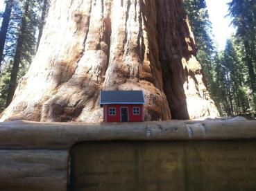 Sequoia National Park, CA. USA. Daniel Ahlberg, June 22, 2013