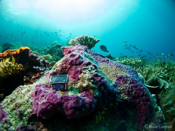 #X.1 The Reef 20140102 Radja Ampat - Melissa's Garden, Papua, Indonesien. Explorers Robin Lilja and Niclas Evestedt Fotocredit Niclas Evestedt