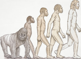 EVOLUTION-SURVEY-large