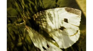 Metamorfosis (Las mariposas no leen a Kafka)