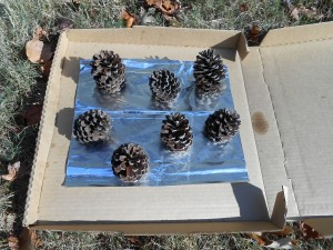 Pine Cones Outside in Pizza Box preserve